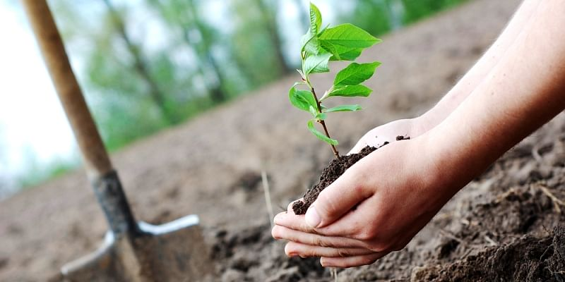 Sri Lankan 73rd Independence Day Tree Planting
